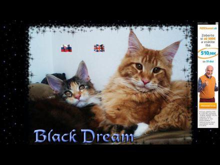 www.black-dream.szm.com